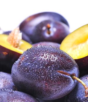 Sadnice voća – Agricom