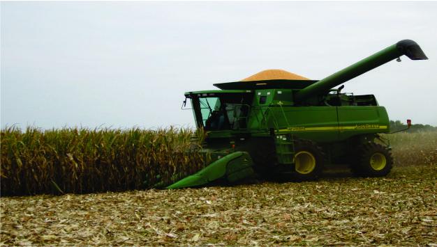 žetva kukuruza 2
