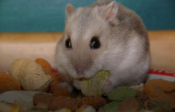 Hrana za male zivotinje