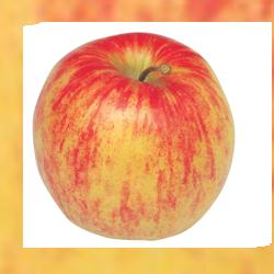 jabuka-jonagold