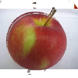 jabuka-prima