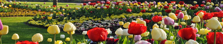 lukovice cvijeca velika slika