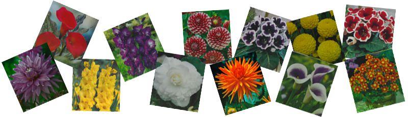 Proljetne lukovice cvijeća