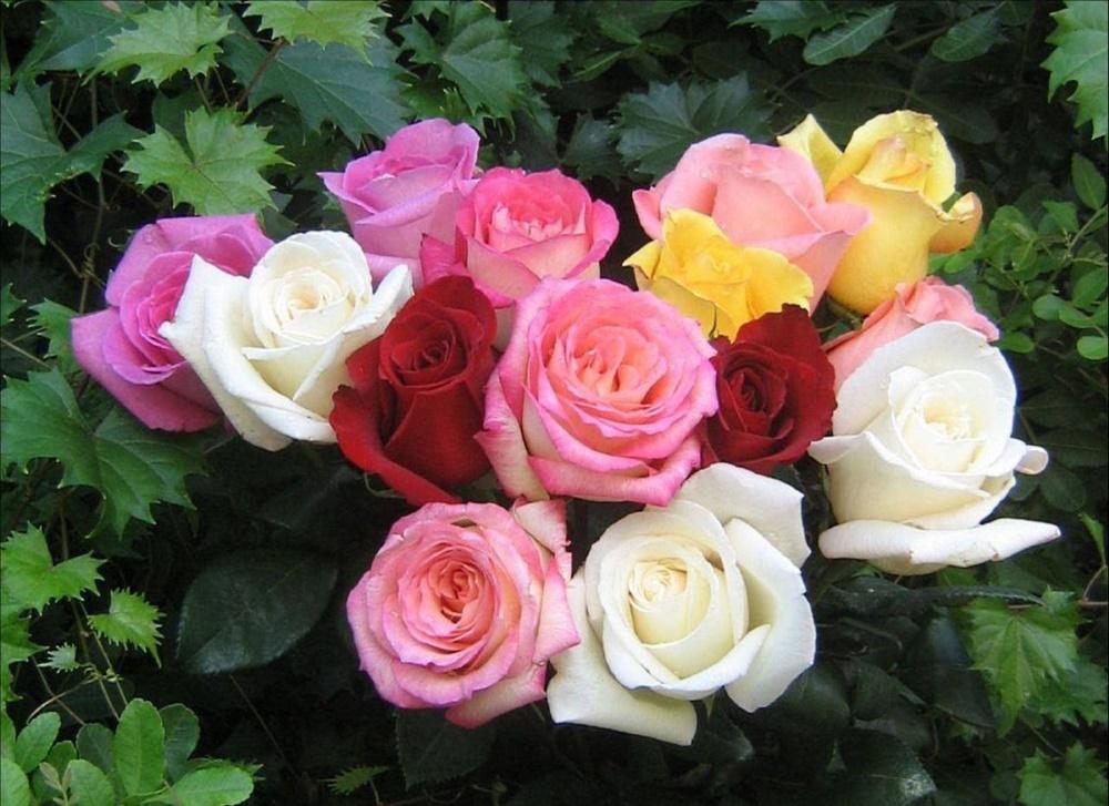 Roses_Beautiful_Color_2560x19201