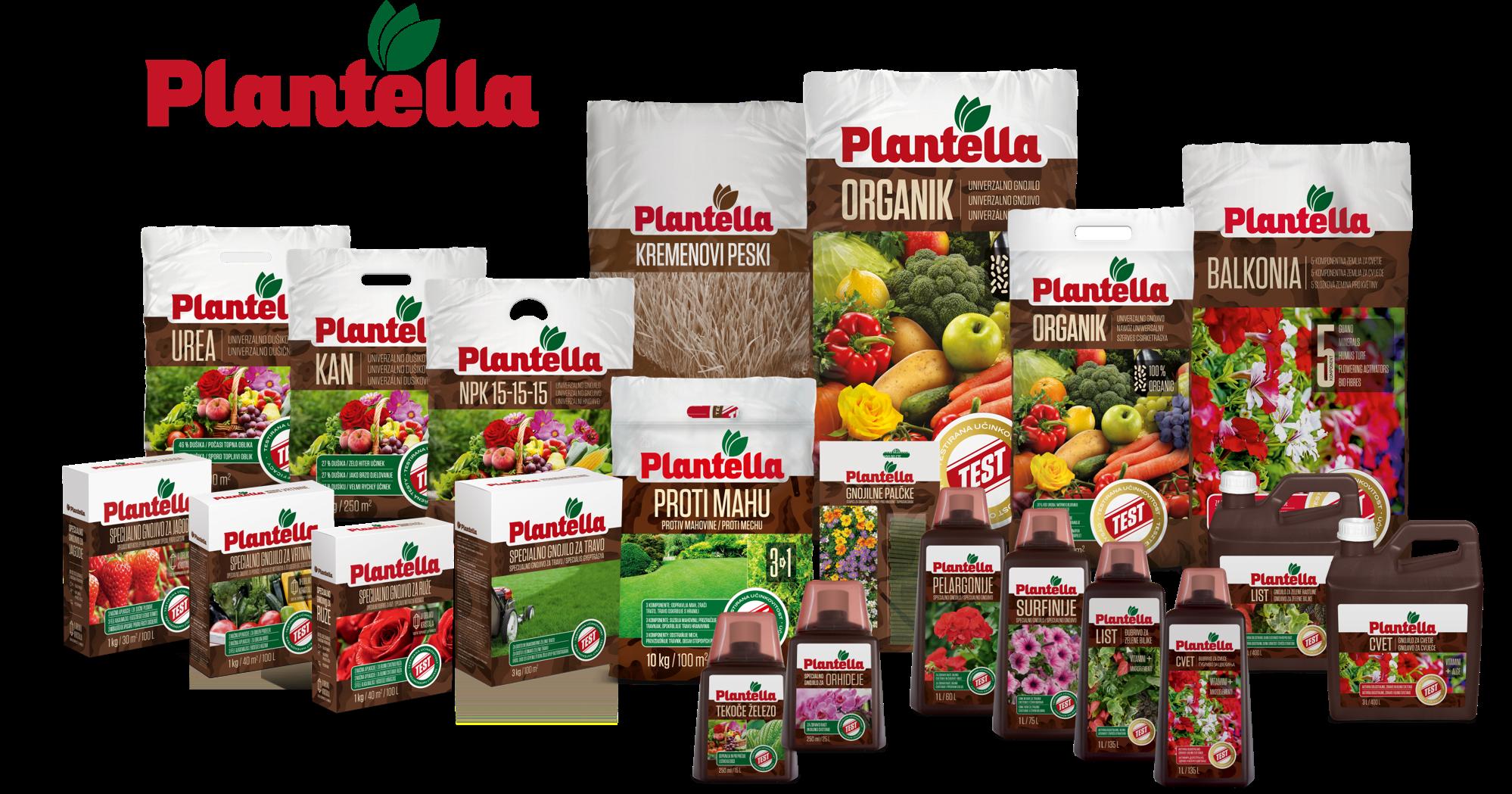 Plantella_skupinska